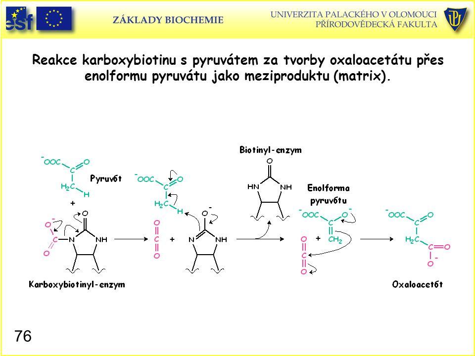 76 Reakce karboxybiotinu s pyruvátem za tvorby oxaloacetátu přes enolformu pyruvátu jako meziproduktu (matrix).