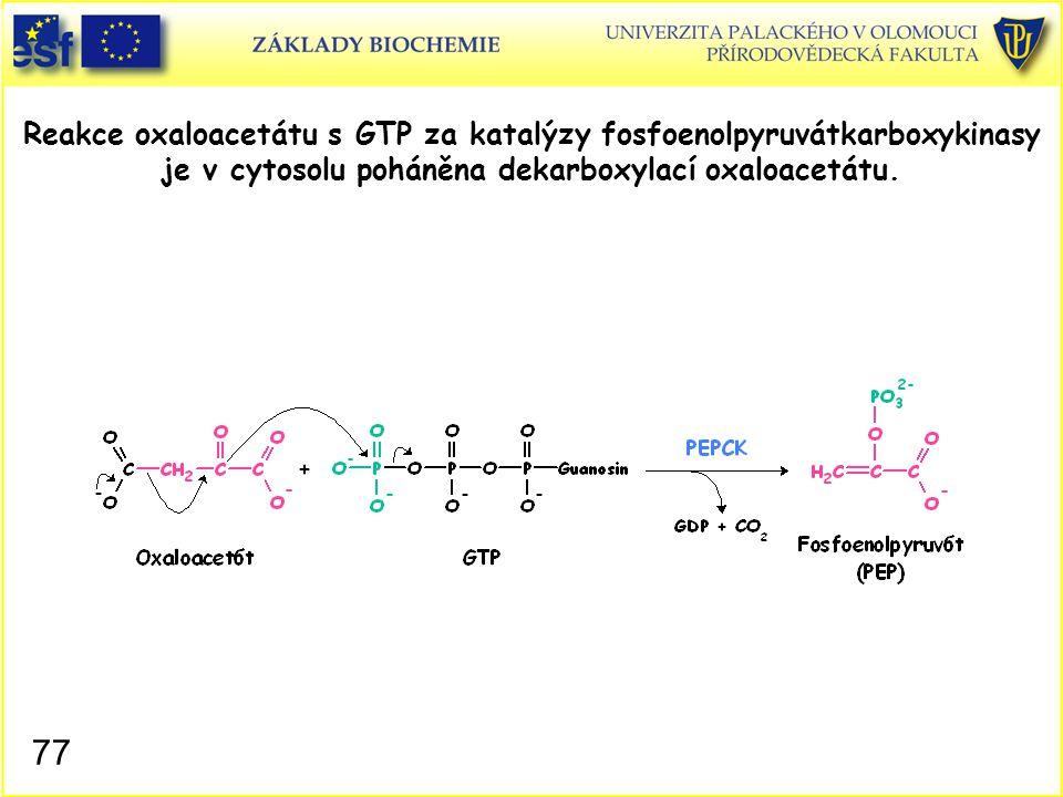 77 Reakce oxaloacetátu s GTP za katalýzy fosfoenolpyruvátkarboxykinasy je v cytosolu poháněna dekarboxylací oxaloacetátu.