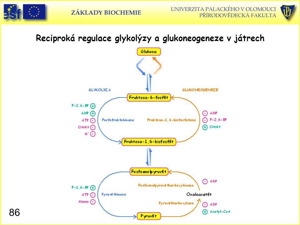 86 Reciproká regulace glykolýzy a glukoneogeneze v játrech