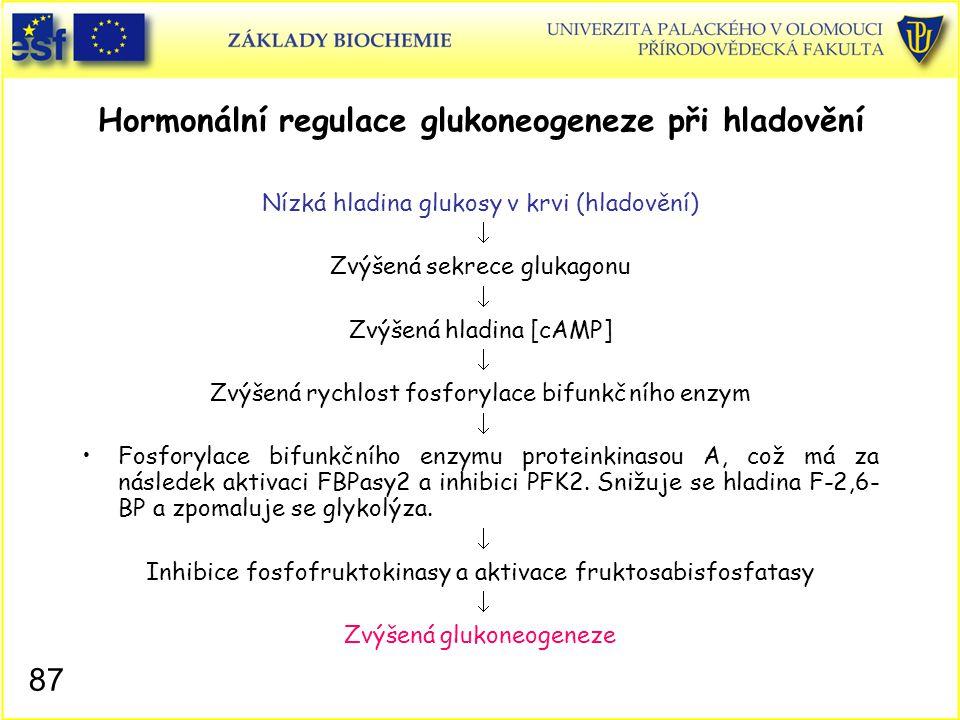 87 Hormonální regulace glukoneogeneze při hladovění Nízká hladina glukosy v krvi (hladovění)  Zvýšená sekrece glukagonu  Zvýšená hladina [cAMP]  Zv