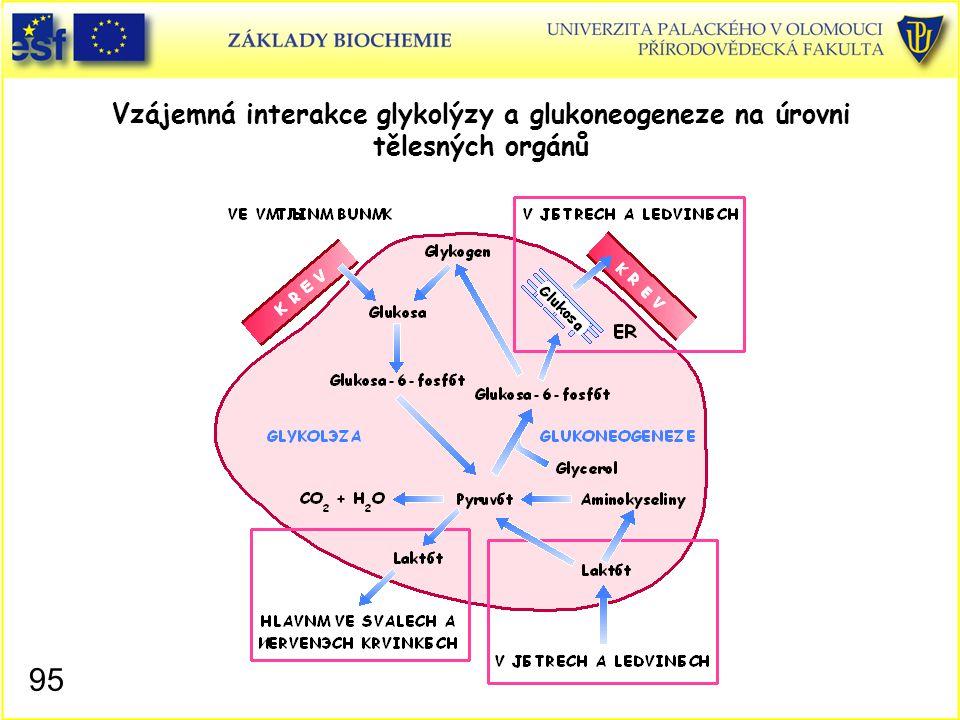 95 Vzájemná interakce glykolýzy a glukoneogeneze na úrovni tělesných orgánů