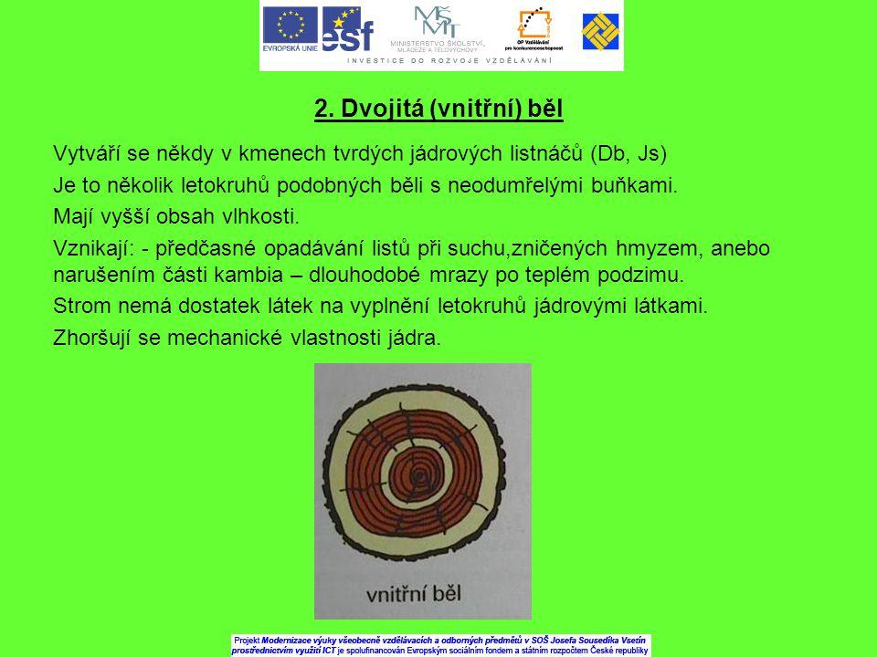 2. Dvojitá (vnitřní) běl Vytváří se někdy v kmenech tvrdých jádrových listnáčů (Db, Js) Je to několik letokruhů podobných běli s neodumřelými buňkami.