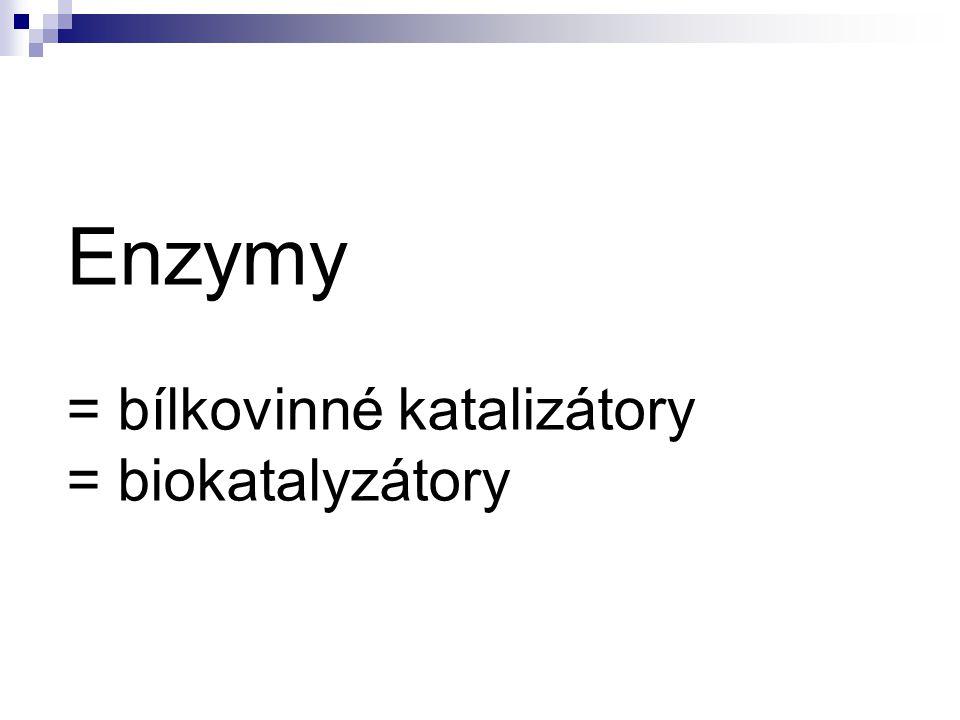 Enzymy = bílkovinné katalizátory = biokatalyzátory
