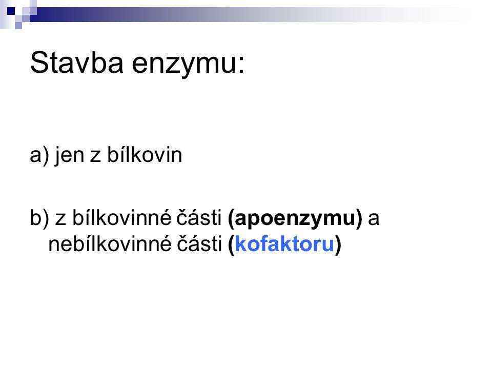 Stavba enzymu: a) jen z bílkovin b) z bílkovinné části (apoenzymu) a nebílkovinné části (kofaktoru)