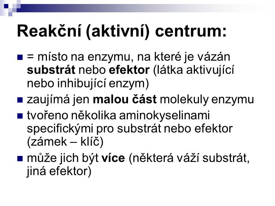 Reakční (aktivní) centrum: = místo na enzymu, na které je vázán substrát nebo efektor (látka aktivující nebo inhibující enzym) zaujímá jen malou část molekuly enzymu tvořeno několika aminokyselinami specifickými pro substrát nebo efektor (zámek – klíč) může jich být více (některá váží substrát, jiná efektor)