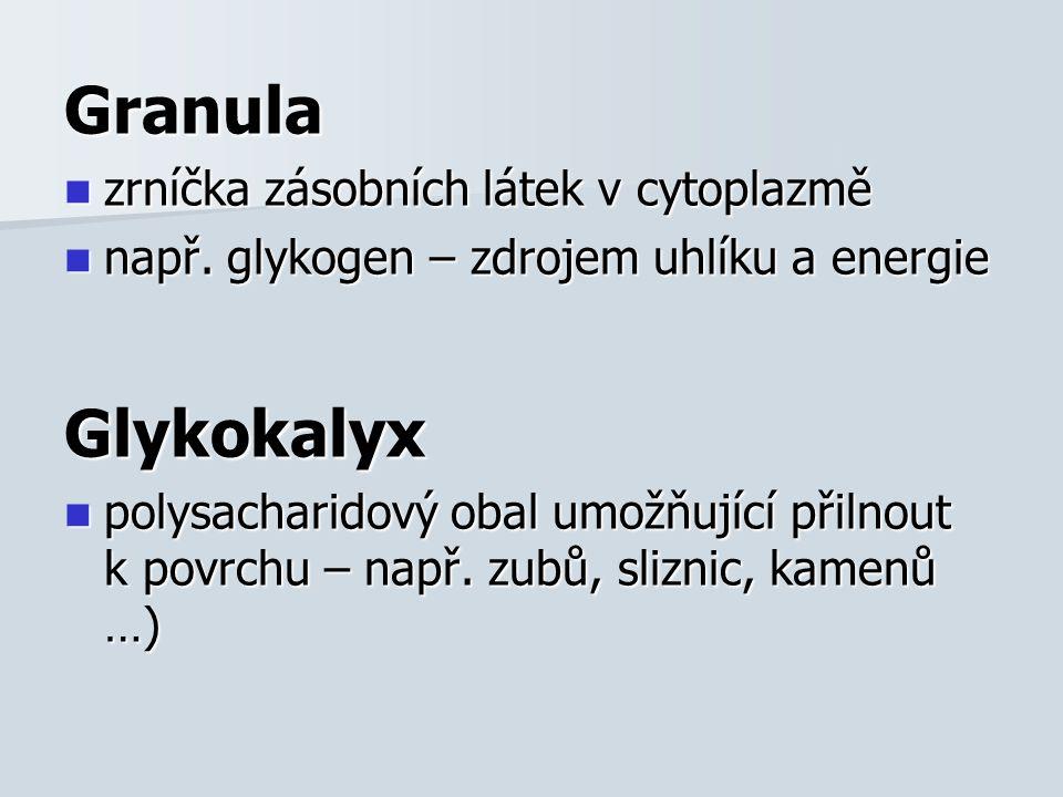 Granula zrníčka zásobních látek v cytoplazmě zrníčka zásobních látek v cytoplazmě např.