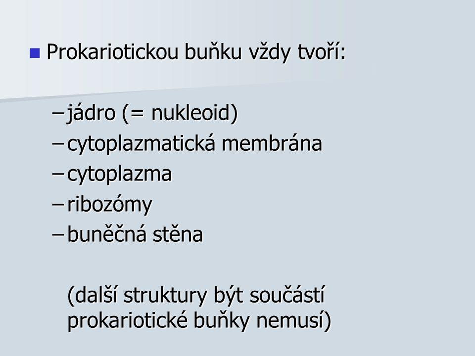Prokariotickou buňku vždy tvoří: Prokariotickou buňku vždy tvoří: –jádro (= nukleoid) –cytoplazmatická membrána –cytoplazma –ribozómy –buněčná stěna (další struktury být součástí prokariotické buňky nemusí)