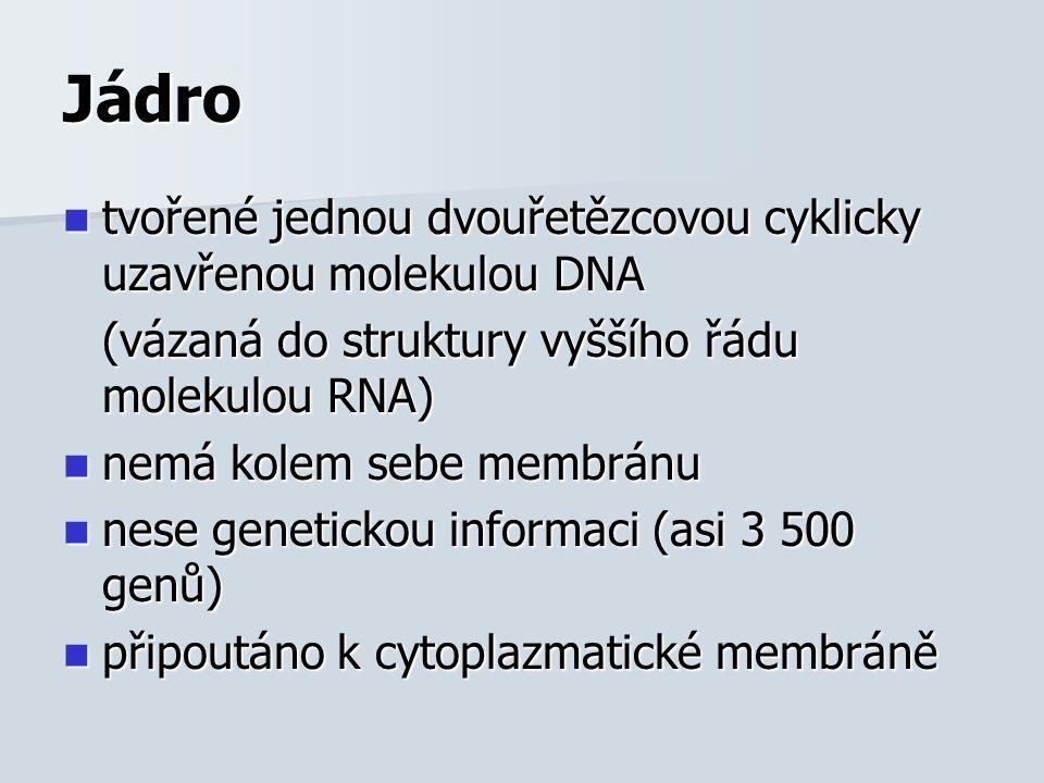 Jádro tvořené jednou dvouřetězcovou cyklicky uzavřenou molekulou DNA tvořené jednou dvouřetězcovou cyklicky uzavřenou molekulou DNA (vázaná do struktury vyššího řádu molekulou RNA) nemá kolem sebe membránu nemá kolem sebe membránu nese genetickou informaci (asi 3 500 genů) nese genetickou informaci (asi 3 500 genů) připoutáno k cytoplazmatické membráně připoutáno k cytoplazmatické membráně