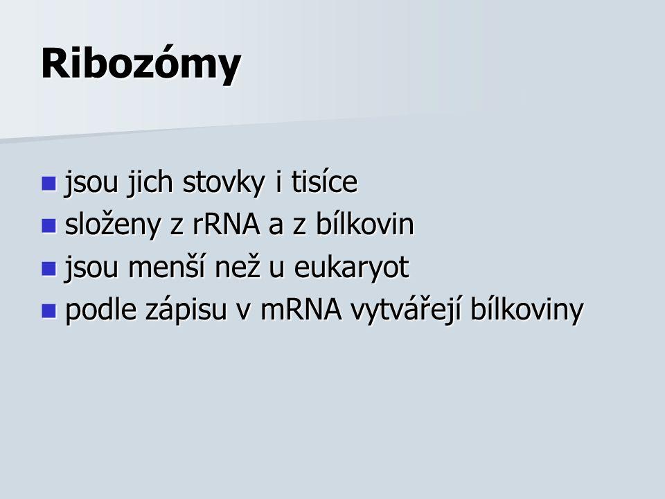 Ribozómy jsou jich stovky i tisíce jsou jich stovky i tisíce složeny z rRNA a z bílkovin složeny z rRNA a z bílkovin jsou menší než u eukaryot jsou menší než u eukaryot podle zápisu v mRNA vytvářejí bílkoviny podle zápisu v mRNA vytvářejí bílkoviny