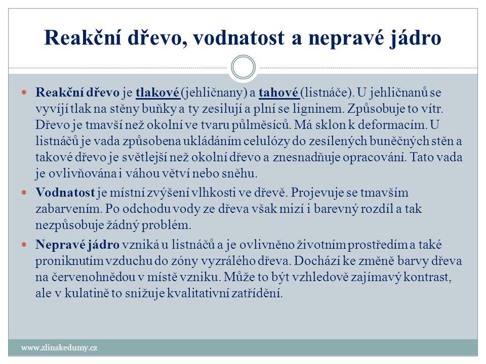 Kontrolní test www.zlinskedumy.cz 1.Jakou barvu má dřeň.