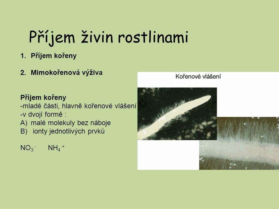 Příjem živin rostlinami 1.Příjem kořeny 2.Mimokořenová výživa Příjem kořeny -mladé části, hlavně kořenové vlášení -v dvojí formě : A)malé molekuly bez náboje B) ionty jednotlivých prvků NO 3 - NH 4 +
