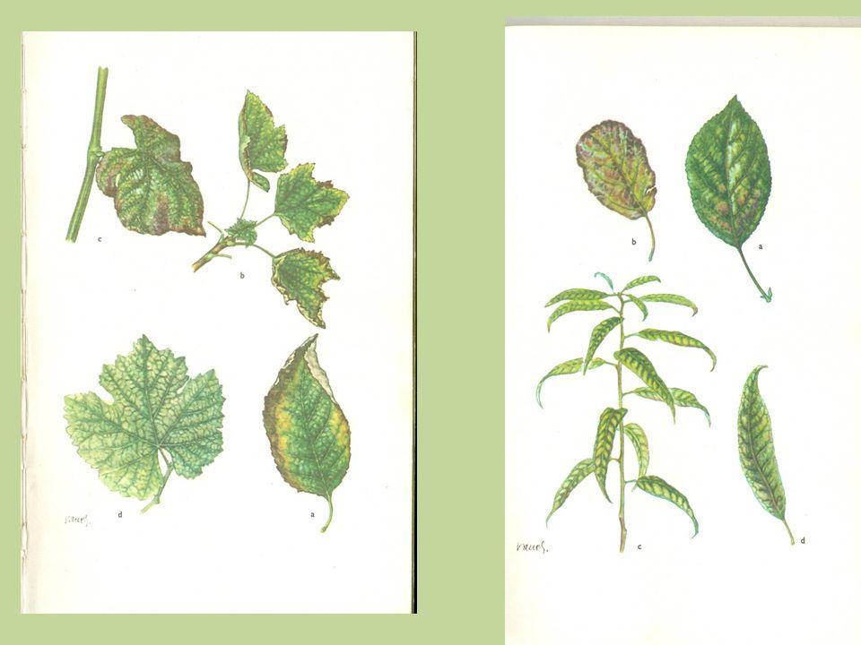 Vhodné rostliny : - levné a dostupné semeno - rychle rostoucí - tvořící velké množství hmoty - pozor na dodržování osevních postupů Svazenka, brutnák, hořčice, komonice, hrách, oves, vlčí bob, peluška, pohanka atd.