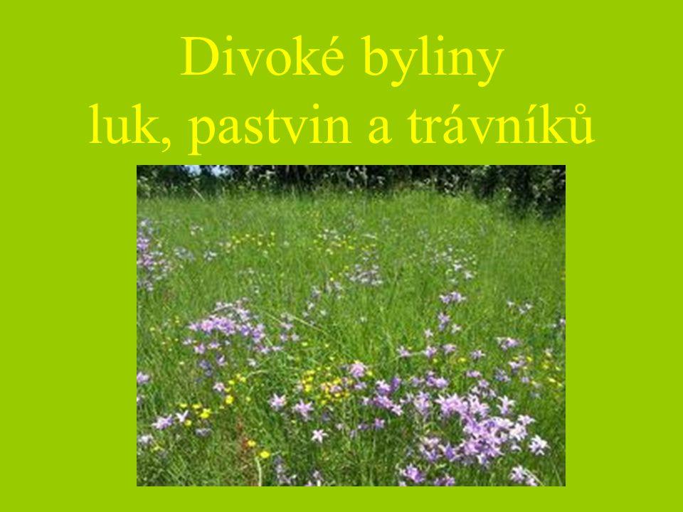Divoké byliny luk, pastvin a trávníků