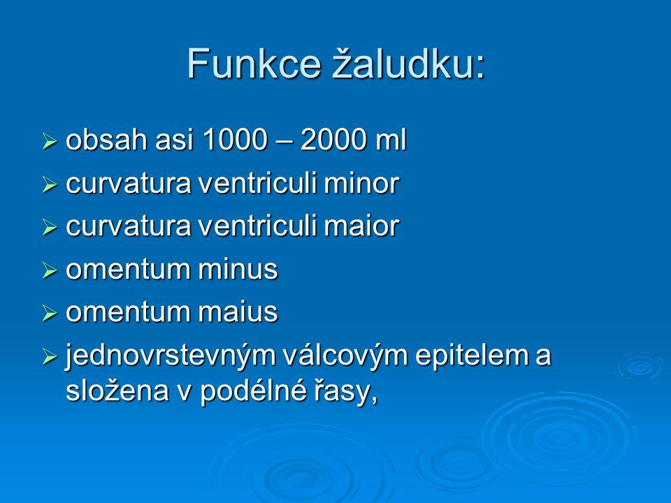 Funkce žaludku:  obsah asi 1000 – 2000 ml  curvatura ventriculi minor  curvatura ventriculi maior  omentum minus  omentum maius  jednovrstevným