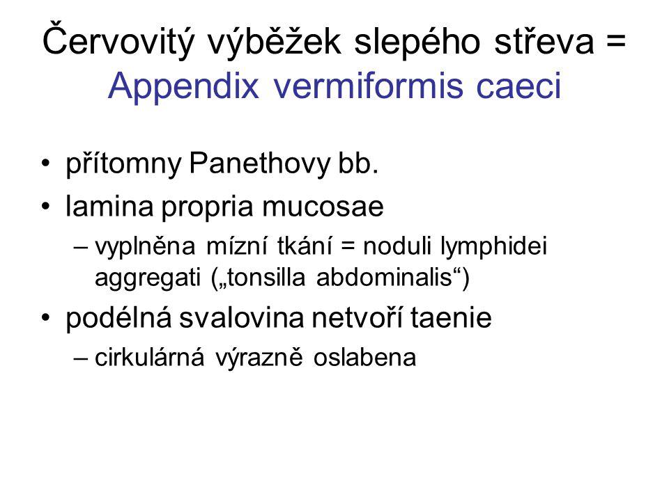 Červovitý výběžek slepého střeva = Appendix vermiformis caeci přítomny Panethovy bb.