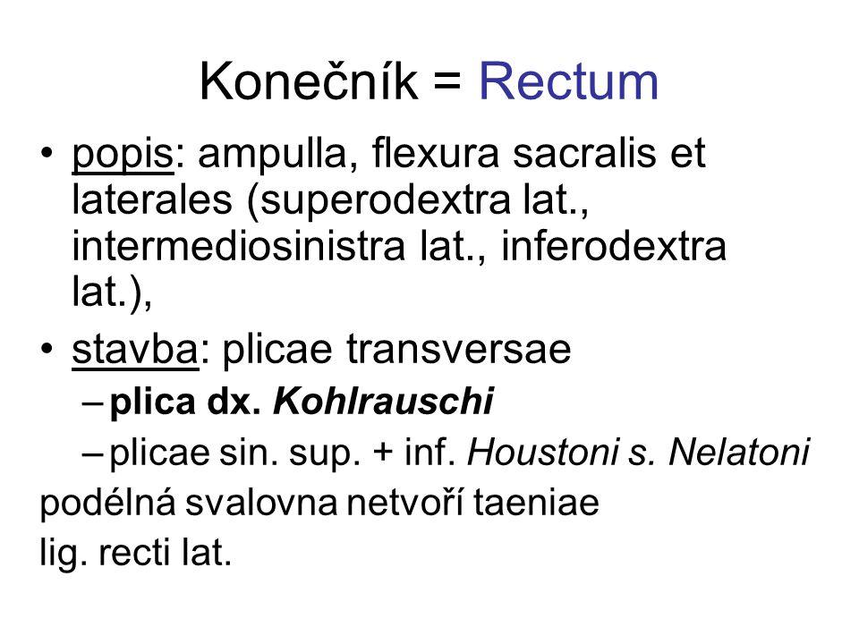 Konečník = Rectum popis: ampulla, flexura sacralis et laterales (superodextra lat., intermediosinistra lat., inferodextra lat.), stavba: plicae transversae –plica dx.