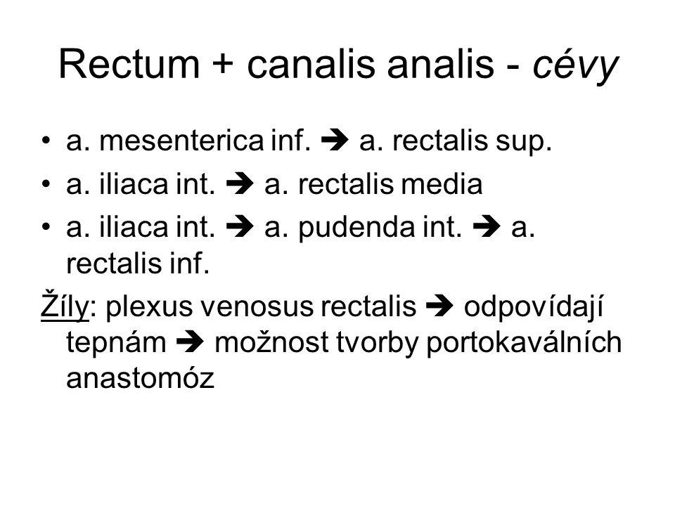 Rectum + canalis analis - cévy a.mesenterica inf.