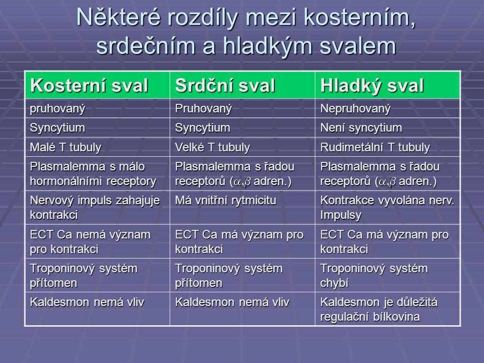 Některé rozdíly mezi kosterním, srdečním a hladkým svalem Kosterní sval Srdční sval Hladký sval pruhovanýPruhovanýNepruhovaný SyncytiumSyncytium Není syncytium Malé T tubuly Velké T tubuly Rudimetální T tubuly Plasmalemma s málo hormonálními receptory Plasmalemma s řadou receptorů (  adren.) Nervový impuls zahajuje kontrakci Má vnitřní rytmicitu Kontrakce vyvolána nerv.