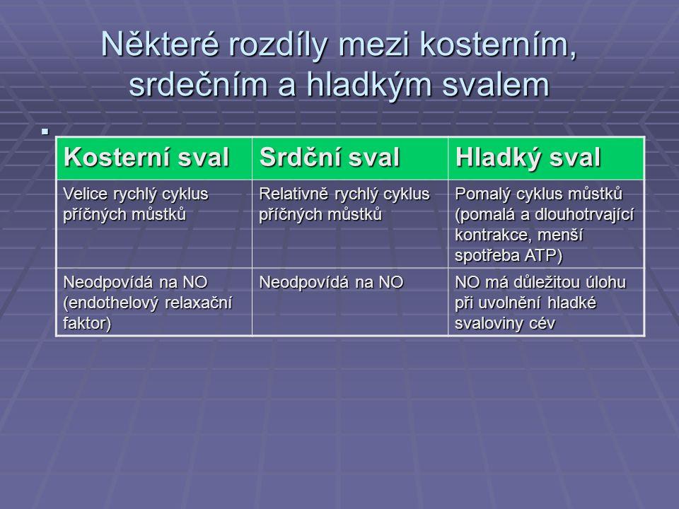 Některé rozdíly mezi kosterním, srdečním a hladkým svalem  Kosterní sval Srdční sval Hladký sval Velice rychlý cyklus příčných můstků Relativně rychlý cyklus příčných můstků Pomalý cyklus můstků (pomalá a dlouhotrvající kontrakce, menší spotřeba ATP) Neodpovídá na NO (endothelový relaxační faktor) Neodpovídá na NO NO má důležitou úlohu při uvolnění hladké svaloviny cév