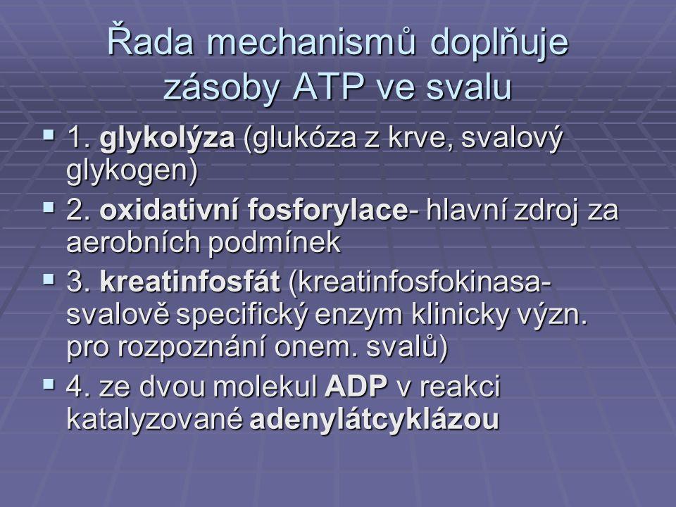 Řada mechanismů doplňuje zásoby ATP ve svalu  1.glykolýza (glukóza z krve, svalový glykogen)  2.