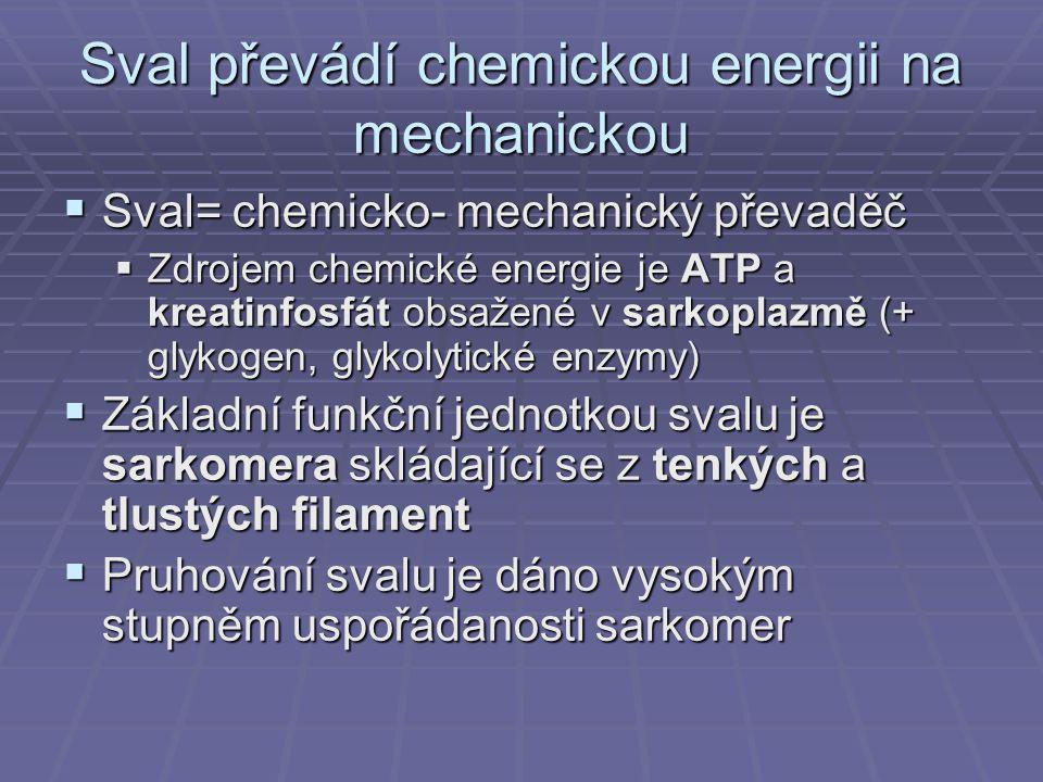 Sval převádí chemickou energii na mechanickou  Sval= chemicko- mechanický převaděč  Zdrojem chemické energie je ATP a kreatinfosfát obsažené v sarkoplazmě (+ glykogen, glykolytické enzymy)  Základní funkční jednotkou svalu je sarkomera skládající se z tenkých a tlustých filament  Pruhování svalu je dáno vysokým stupněm uspořádanosti sarkomer