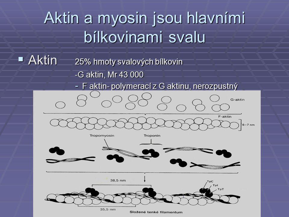 Aktin a myosin jsou hlavními bílkovinami svalu  Myosin 55% hmoty svalových bílkovin Mr 460 000, asymetrický hexamer vláknitá část a globulární hlava má ATPasovou aktivitu, váže se s F-aktinem
