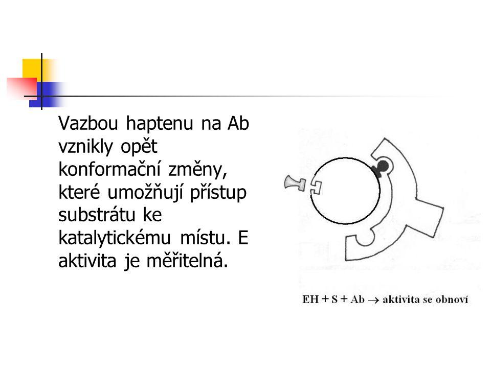 Vazbou haptenu na Ab vznikly opět konformační změny, které umožňují přístup substrátu ke katalytickému místu. E aktivita je měřitelná.
