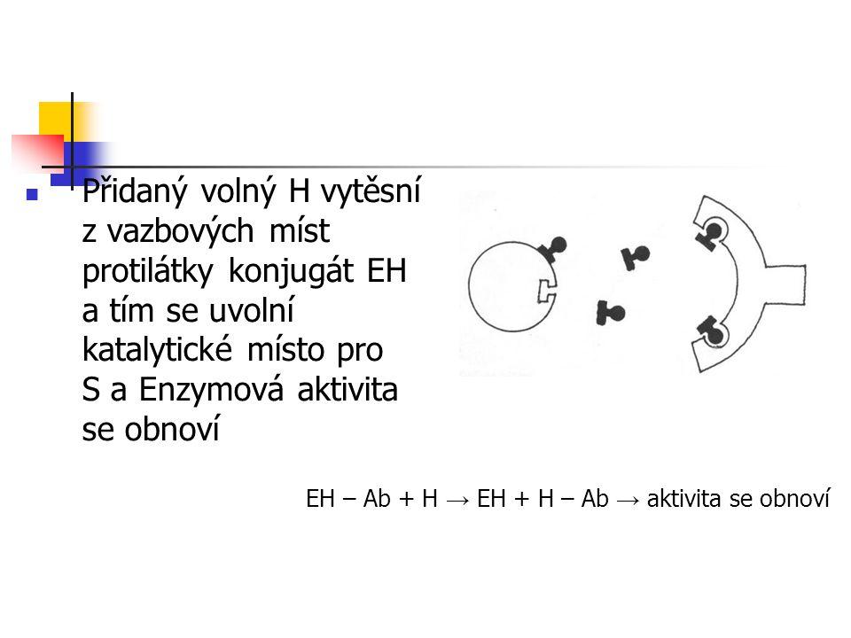 Přidaný volný H vytěsní z vazbových míst protilátky konjugát EH a tím se uvolní katalytické místo pro S a Enzymová aktivita se obnoví EH – Ab + H → EH