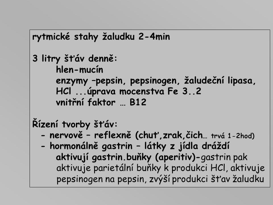 Buňky -hlenu Buňky - lipázy Buňky - pepsinogen B. parietální - HCl Buňky - gastrinu Sliznice = jamky na 1jamku připadá 3-7žláz