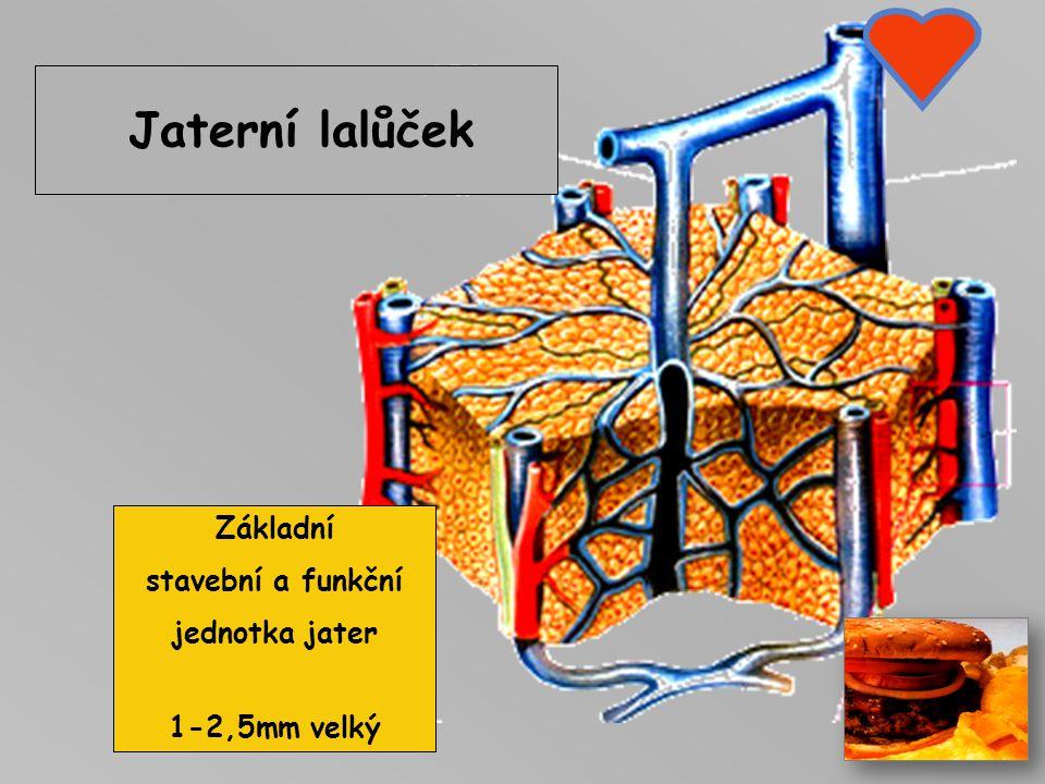 JÁTRA Největší žláza těla 1500gr, 4 Laloky: pravý..... levý čtvercový (quadratus) dolní (caudatus, lalok DDž) Hilus jater – vstupní brána do jater (te