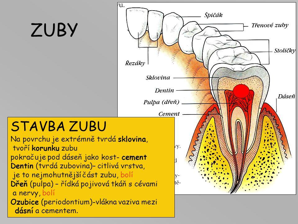 DUTINA ÚSTNÍ Ohraničení Jazyk funkce: jíst, míchat potravu se slinami + chuť + mluvit (L,D,Ch,K … ) Měkké patro– čípek (uvula) Imunitní okruh: nosní,