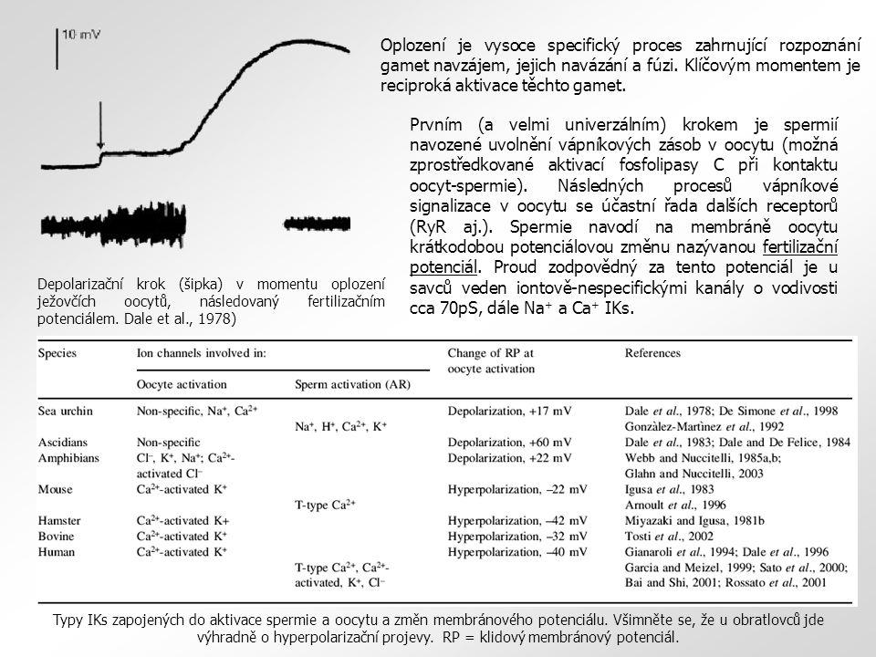 Prvním (a velmi univerzálním) krokem je spermií navozené uvolnění vápníkových zásob v oocytu (možná zprostředkované aktivací fosfolipasy C při kontakt
