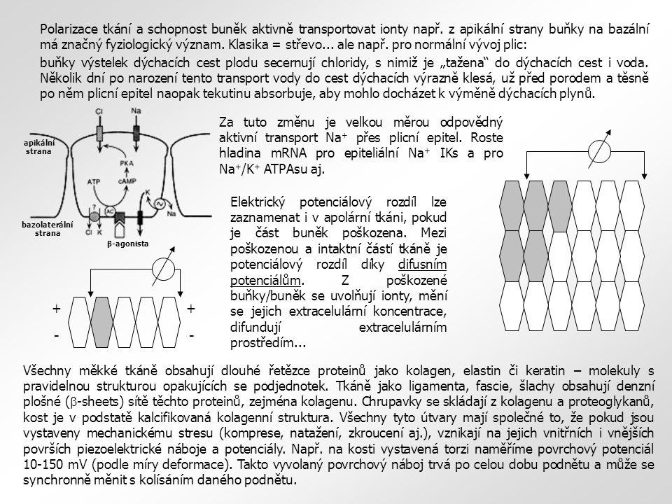 Elektrický potenciálový rozdíl lze zaznamenat i v apolární tkáni, pokud je část buněk poškozena.