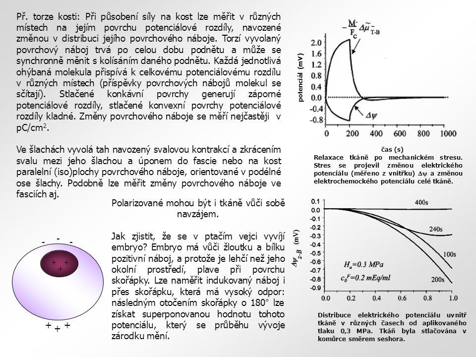 Polarizované mohou být i tkáně vůči sobě navzájem. Jak zjistit, že se v ptačím vejci vyvíjí embryo? Embryo má vůči žloutku a bílku pozitivní náboj, a