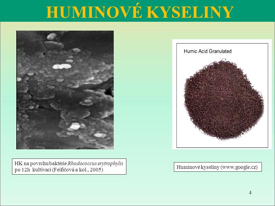 HK na povrchu baktérie Rhodococcus erytrophylis po 12h kultivaci (Feifičová a kol., 2005) HUMINOVÉ KYSELINY Huminové kyseliny (www.google.cz) 4