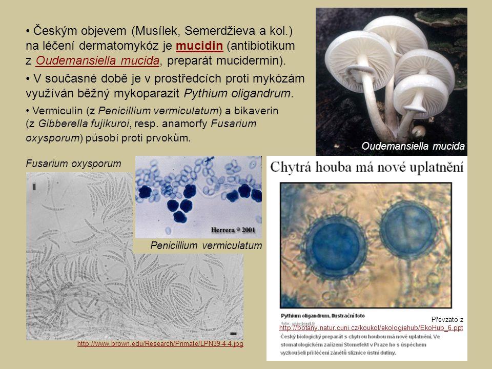 Oudemansiella mucida Fusarium oxysporum Penicillium vermiculatum Českým objevem (Musílek, Semerdžieva a kol.) na léčení dermatomykóz je mucidin (antibiotikum z Oudemansiella mucida, preparát mucidermin).mucidinOudemansiella mucida V současné době je v prostředcích proti mykózám využíván běžný mykoparazit Pythium oligandrum.