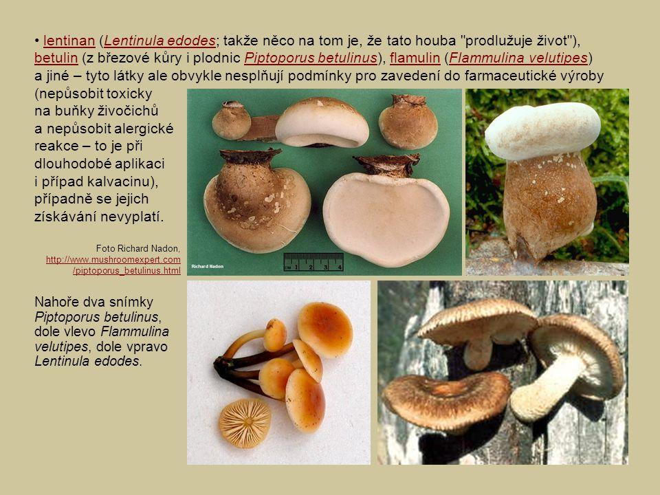 lentinan (Lentinula edodes; takže něco na tom je, že tato houba