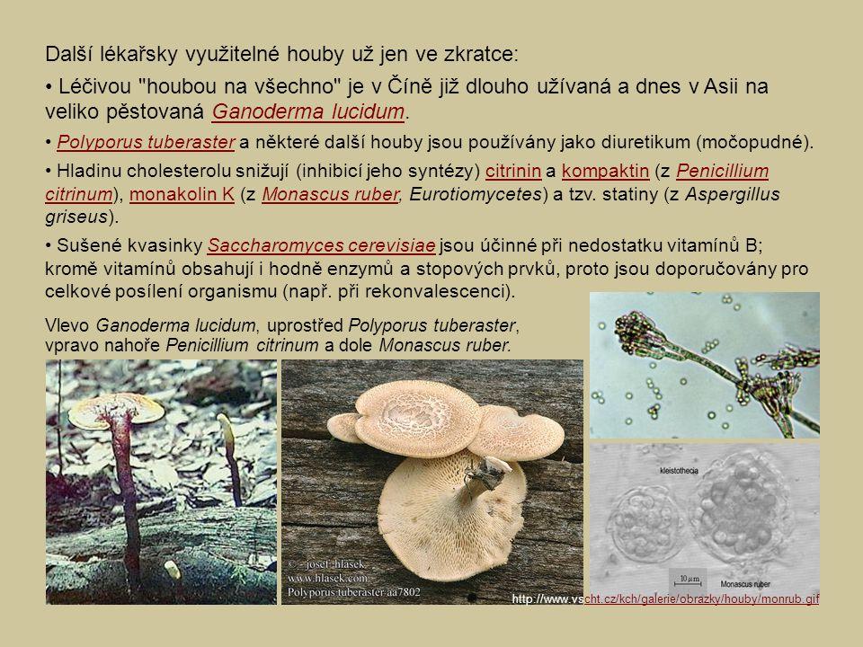 Další lékařsky využitelné houby už jen ve zkratce: Léčivou houbou na všechno je v Číně již dlouho užívaná a dnes v Asii na veliko pěstovaná Ganoderma lucidum.Ganoderma lucidum Polyporus tuberaster a některé další houby jsou používány jako diuretikum (močopudné).Polyporus tuberaster Hladinu cholesterolu snižují (inhibicí jeho syntézy) citrinin a kompaktin (z Penicillium citrinum), monakolin K (z Monascus ruber, Eurotiomycetes) a tzv.