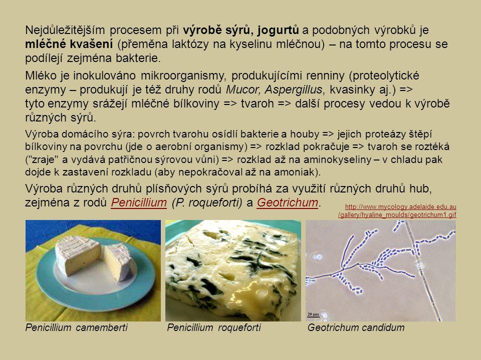 Nejdůležitějším procesem při výrobě sýrů, jogurtů a podobných výrobků je mléčné kvašení (přeměna laktózy na kyselinu mléčnou) – na tomto procesu se po