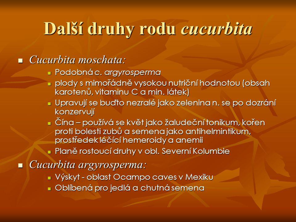Cucurbita moschata Cucurbita fictifolia Cucurbita argyrosperma