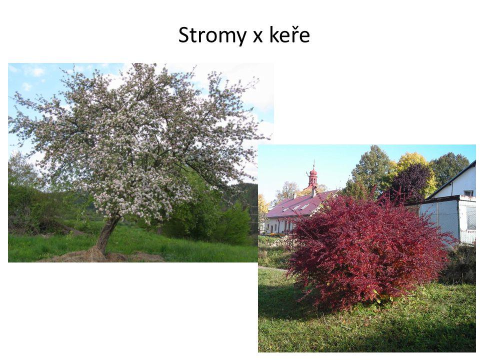 Stromy x keře