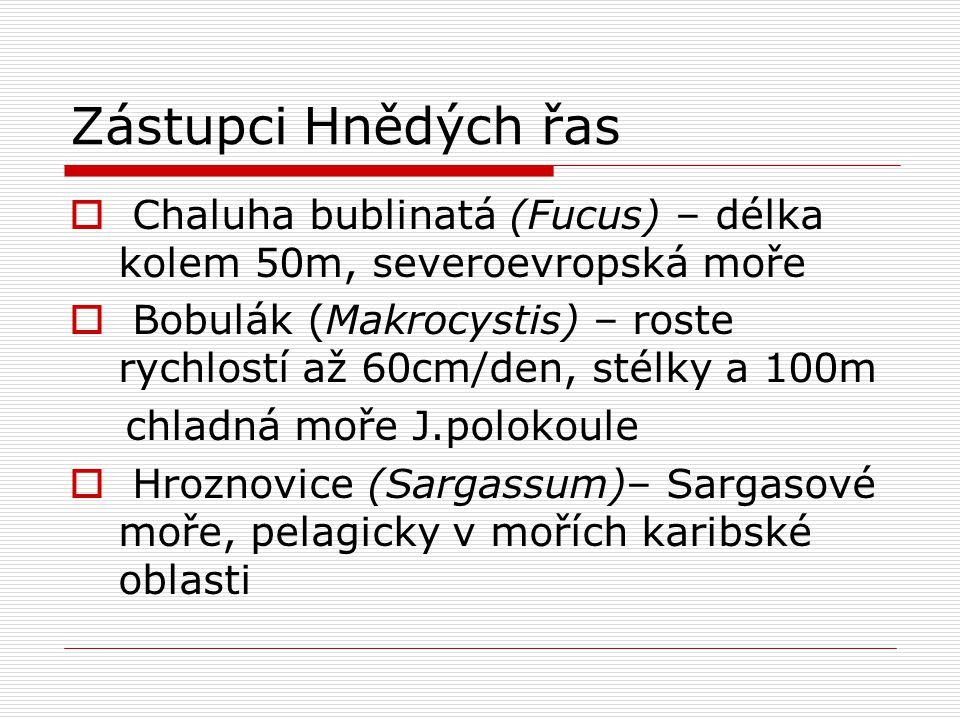 Zástupci Hnědých řas  Chaluha bublinatá (Fucus) – délka kolem 50m, severoevropská moře  Bobulák (Makrocystis) – roste rychlostí až 60cm/den, stélky