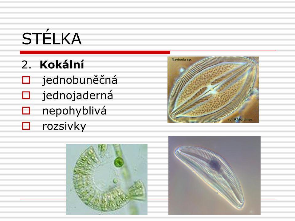 Oddělení: ZELENÉ ŘASY (CHlorophyta)  představují samostatnou vývojovou linii  zahrnují všechny typy stélek  převažují sladkovodní druhy  10%zástupců žije v moři  některé se přizpůsobily suchozemskému způsobu života