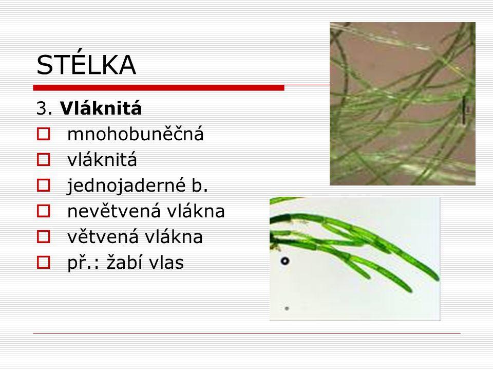 STÉLKA 3. Vláknitá  mnohobuněčná  vláknitá  jednojaderné b.  nevětvená vlákna  větvená vlákna  př.: žabí vlas