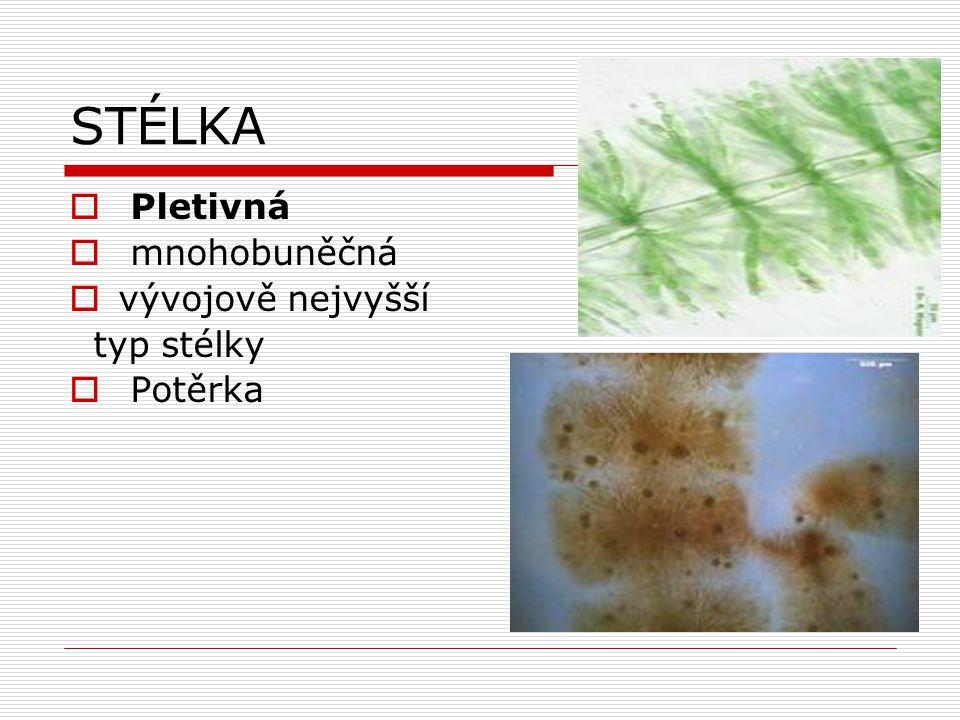 Oddělení: Parožnatky (Charophyta)  nejdokonalejší skupina řas  starobylá skupina (Silur)  prý měly společného předka s vyššími rostlinami  vzpřímená přeslenitě větvené stélka (připomínají přesličky) – pletivná  pohlavní r.