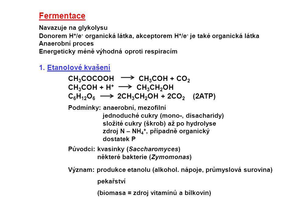 Fermentace Navazuje na glykolysu Donorem H + /e - organická látka, akceptorem H + /e - je také organická látka Anaerobní proces Energeticky méně výhod
