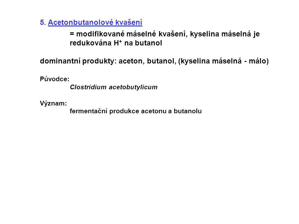 5. Acetonbutanolové kvašení = modifikované máselné kvašení, kyselina máselná je redukována H + na butanol dominantní produkty: aceton, butanol, (kysel