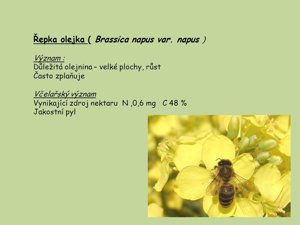 Hořčice bílá – Sinapsus albus Význam : Olejnina Surovina v potravinářství Zelené hnojení Od nížin do vyšších poloh, i nízké teploty, zplaňuje Včel.