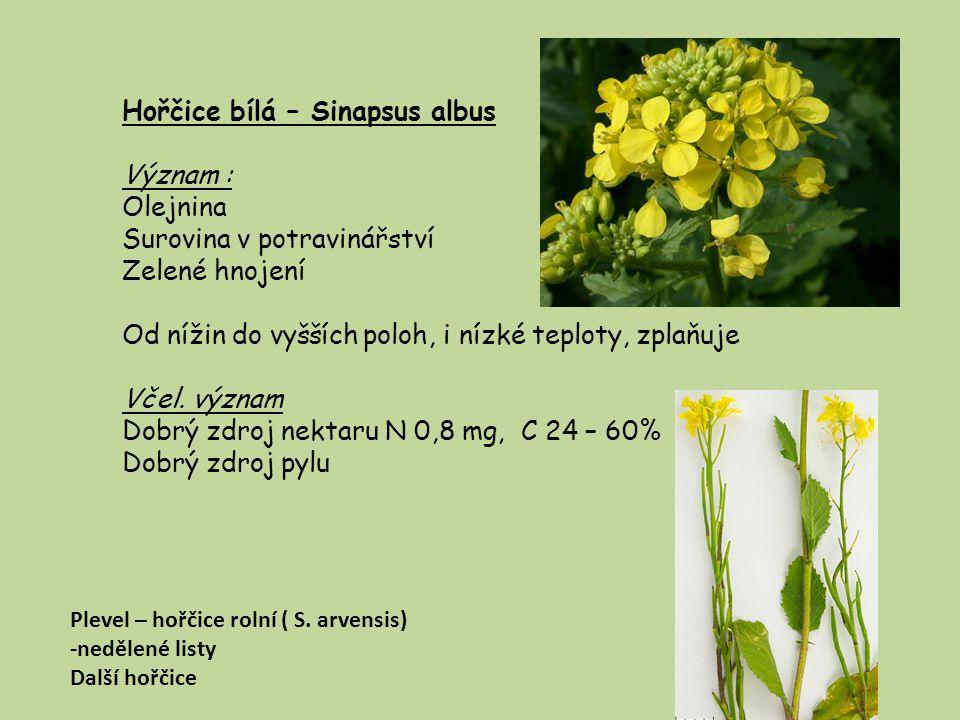 Brukev zelná – Brassica oleracea Prastará užitková zelenina, základ pro všechny košťálové zeleniny Význam : Variety – důležitá zelenina Včel.