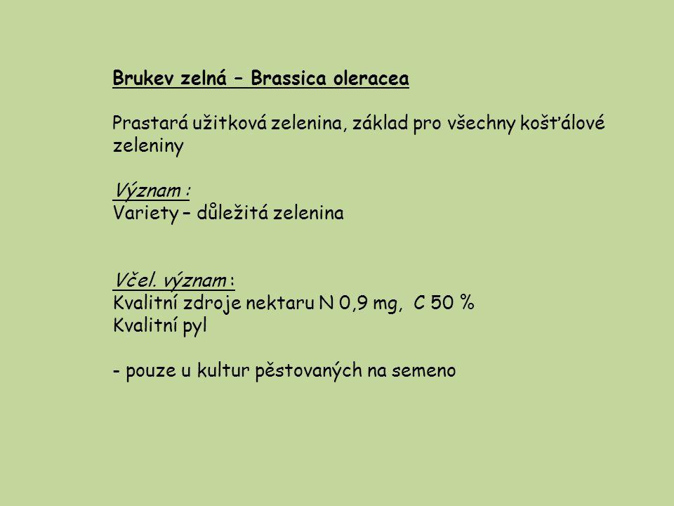 Ohnice rolní – Raphanus raphanistrum - podobná hořčici ( přisedlé lístky kalichu ) -plevel na rumištích, úhorech i polích Včel.